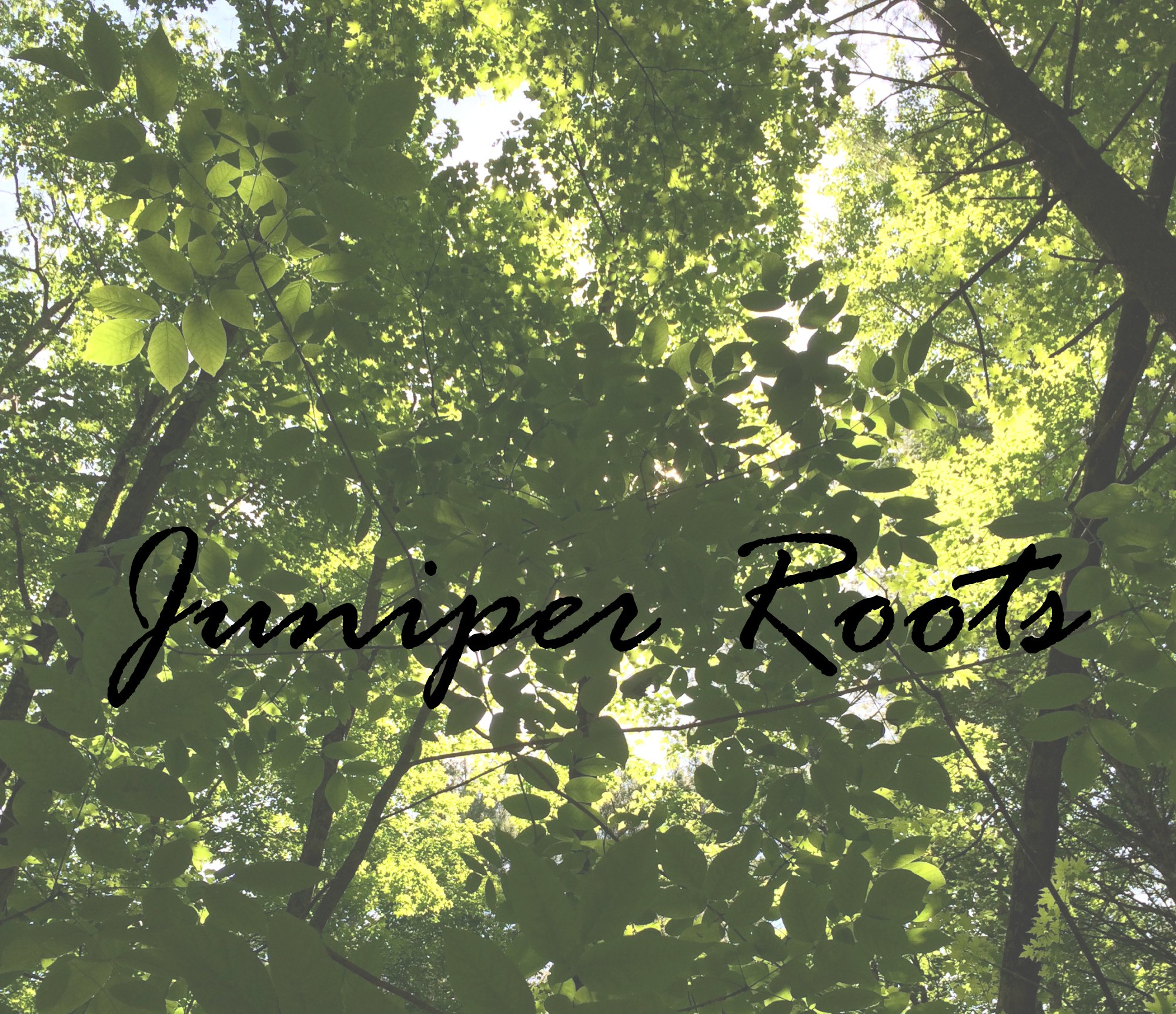 Juniper Roots