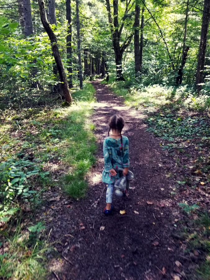 late summer walk in the woods